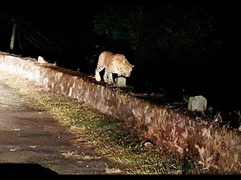 Night Safari at Valparai