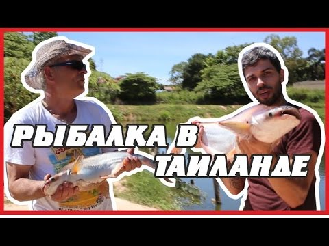 рыбалка в адене