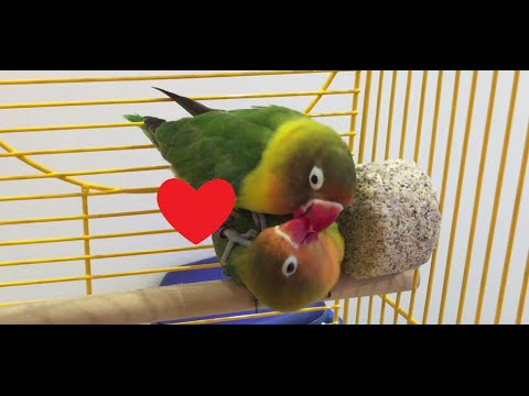 Love bird sex
