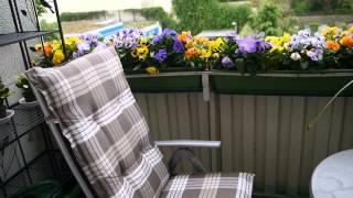 Выращивание цветов на балконе: как вырастить цветник на лоджии, фото, видео
