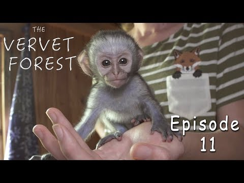 Baby Monkey Rescued By Wildlife Sanctuary - Ep. 11