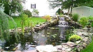 Bonsia -  Koi Pond