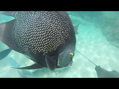 Discovery  Cove - Snorkeling 2017