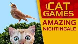 CAT GAMES - 🐦 Amazing singing nightingale! (VIDEO FOR CATS TO WATCH) 3 HOURS 4K