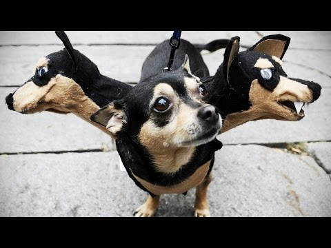 DOGS in COSTUMES (HD) [Funny Pets]