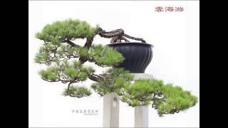 Những Tác Phẩm Bonsai của Trung Quốc - www.hoalancaycanh.com/diendan