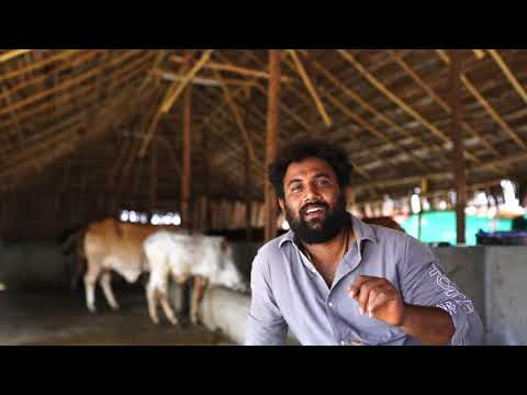 Ksheera Organic Milk - Introducing Our Cattle's , Hebbevu Farms A Fully Managed Farm Land Bangalore