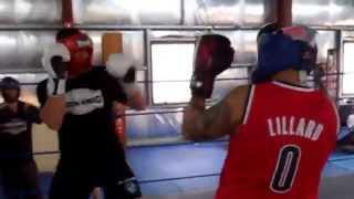 Blue Cattle Dog Boxing Gym Sydney Western Suburbs