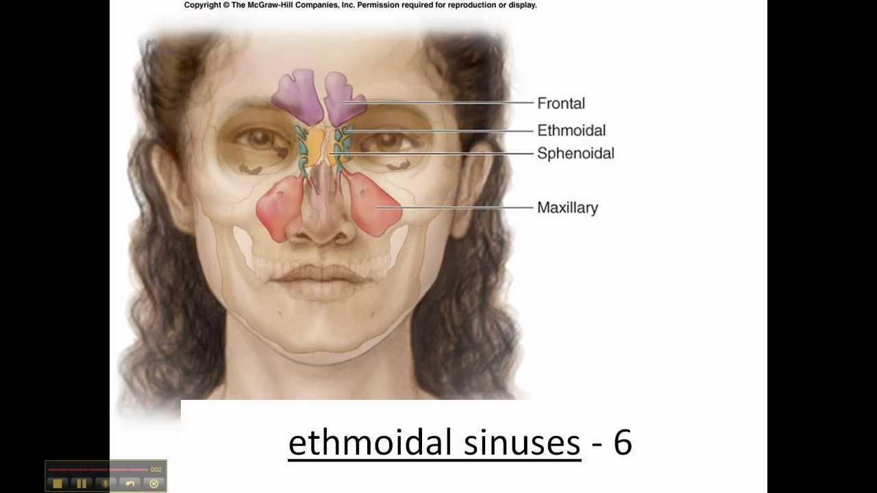 sphenoid & ethmoid bone - cranium - skull - youtube, Human Body