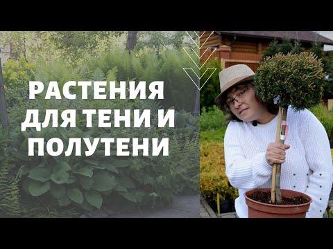 Растения для тени и полутени. Тенистый сад