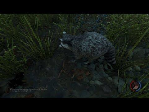 the forest v 1.11 место где можно найти самое редкое животное в игре (енота)