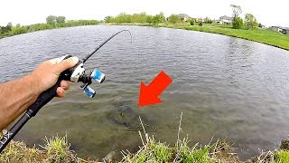 Giant NASTY Creature caught Fishing in Neighborhood Pond!!!