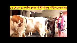 সরাসরি পাইকারী দামে | ১৫ থেকে ২৫ কেজি দুধের গাভী কিনুন | পাইকারের কাছে থেকে | Munno Dairy Farm