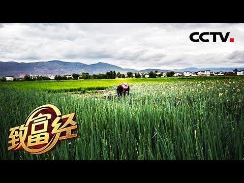 《致富经》怎么把钱赚? 三个数字一把蒜 20190226 | CCTV农业