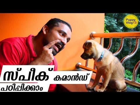 Train Your Dog to Speak   Speak command   ഡോഗ് ട്രെയിനിംഗ്   Dog tricks malayalam