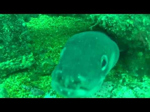 Diveworld Videos   Isle of Man part2