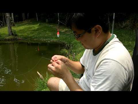Como pescar uma tilápia (How to fish a little tilapia)