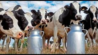 Principales razas lecheras bovinas y sistemas de producción