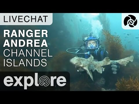 Channel Island Adventures with Diver Andrea - Live Chats Episode 02