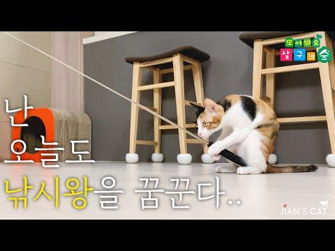 [ENG SUB] My Kitten Catching Fish like a person. Fishing Cat!из YouTube · Длительность: 4 мин21 с