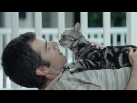 new-whiskas-commercial