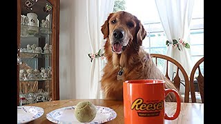 FUNNY DOG DRINKS MORNING COFFEE! DOG DRINKS FROM COFFEE CUP!