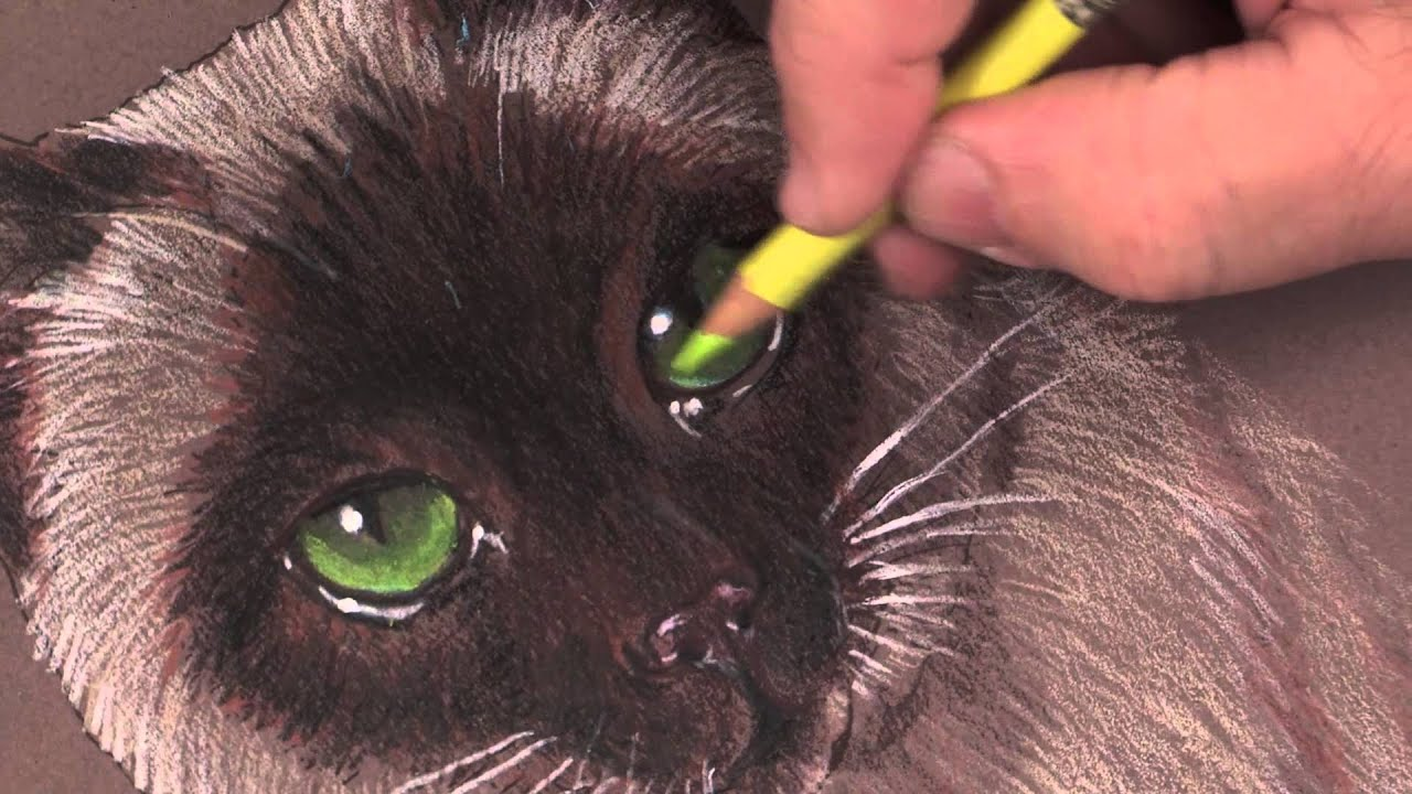 Do bengal cats eyes change colour