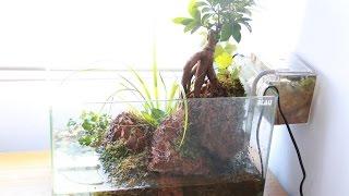 Paludario de peces y cangrejos 1/3 BONSAI Ficus (Geosesarma Vampire y Guppys)   Acuarios ConanDanco