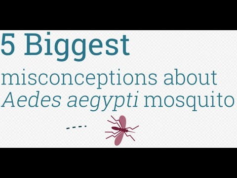 5 Myths of the Aedes aegypti mosquito