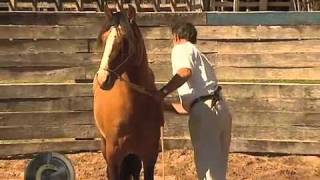 Doma Índia Oscar Scarpati no Programa Cavalos Crioulos parte 2