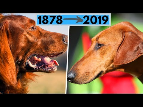 All AKC Dog Breeds by Year Recognized (from 1878 to 2019)