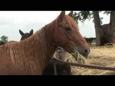 Nebraska Horses: Moving On