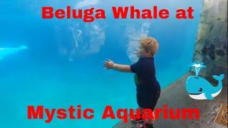 Mystic Aquarium Trip! Sea Lion Show, Beluga Whale, and Dinosaurs!