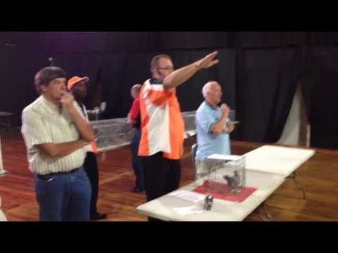 Auction of the Winning 2014 SAMDPR Pigeon