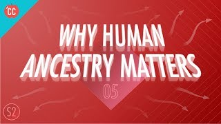 Why Human Ancestry Matters: Crash Course Big History 205