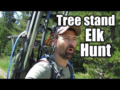 How To Hunt Elk Out Of A Tree Stand | Wyoming Archery Elk |