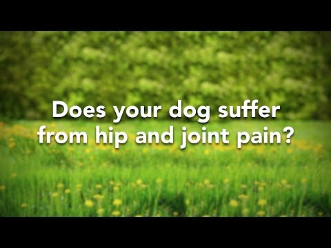 does-your-dog-suffer-from-hip-&-joint-pain?