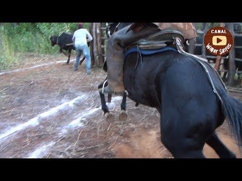 Pega de Boi no mato em Moreilândia vídeo completo