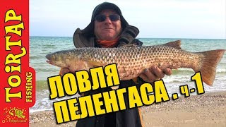 Ловля пеленгаса с берега на море .Секреты ловли пеленгаса