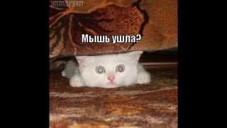 смешная фото подборка про кошек с надписями.