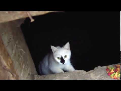 Scared cats jumping from basement4