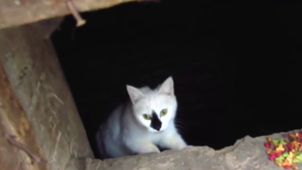 Scared cats jumping from basement4 - YouTube