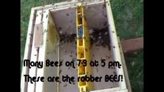Bee Hive Being Robbed