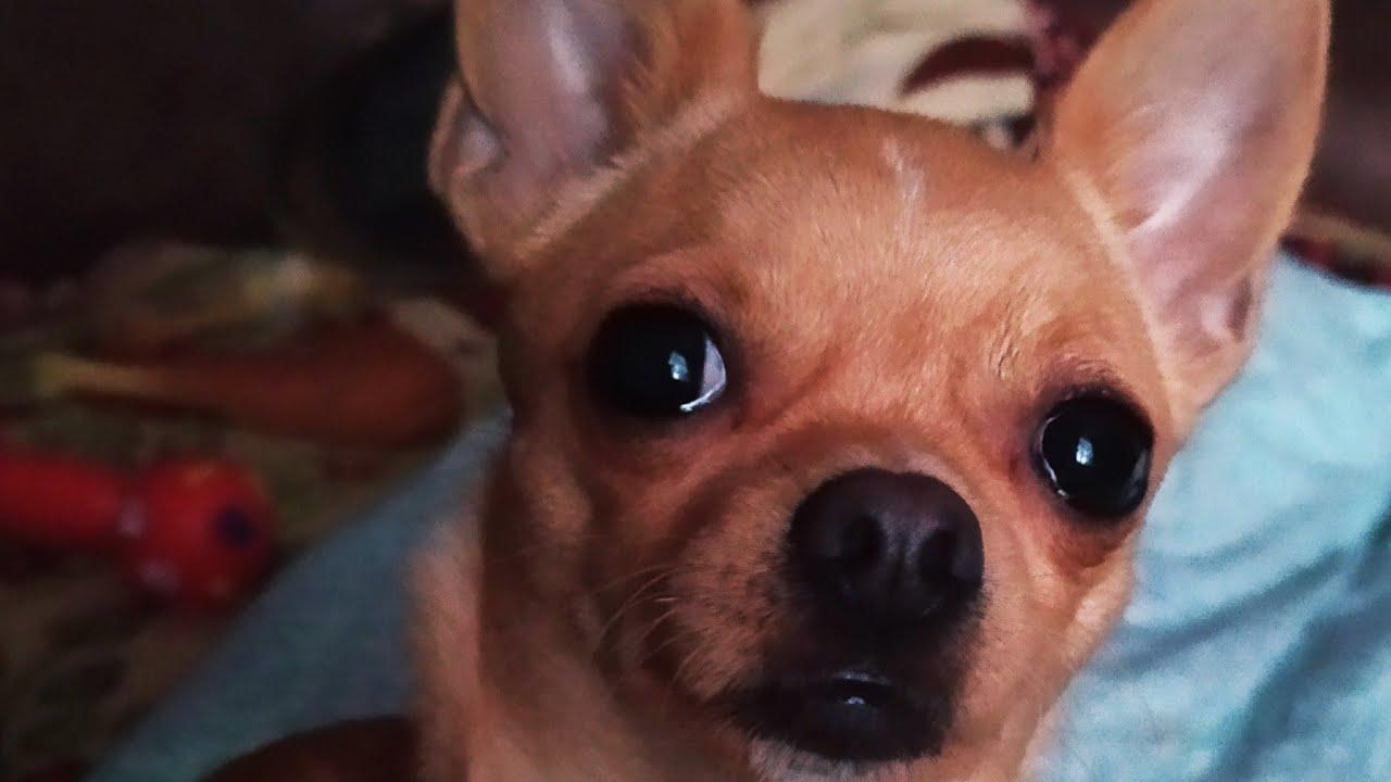 Собака-друг человека/ Моя Бонита - YouTube