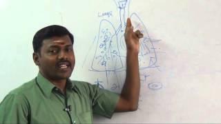 VITAL ENERGY LUNGS - PLANET HEALER DR.GANDHI