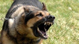Drunk man barks at police dog named