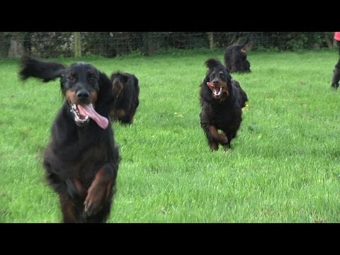 Around the Dog World - Hounds of Scotland (Ep 30)