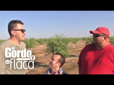 El Gordimóvil Llegó A Fresno, California, Para Ayudar A Los Trabajadores Agricultores