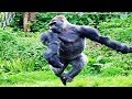 Breakdancing Gorilla to Maniac Enjoys Pool Behind-the-Scenes
