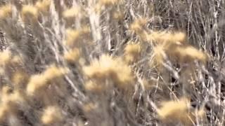Valley Maker - Oh Lightning (Official Video)